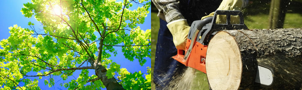 Tree Services Boston
